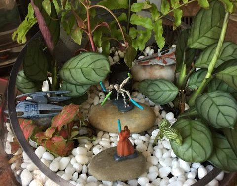 DIY Star Wars Terrarium