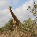 Africa Tour Part 4 – Safari tour and community networking in Nairobi