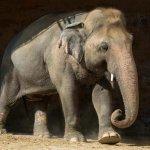 Elephant case highlights poor animal welfare